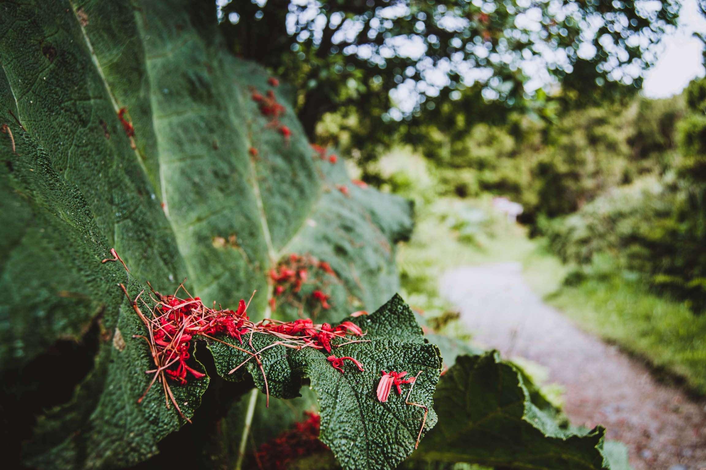 Plante Parc National de Chiloé