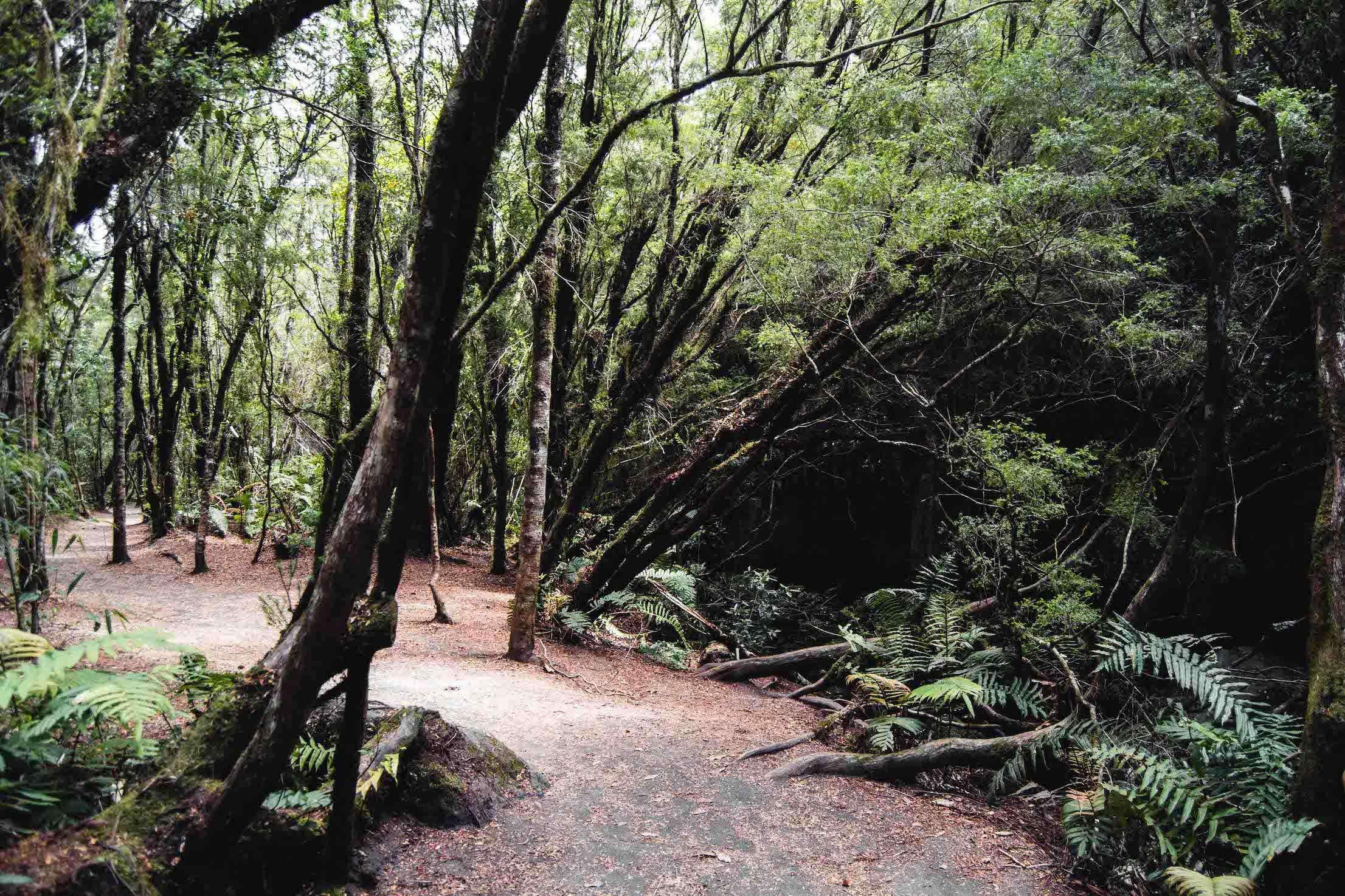 Dans la forêt des chutes de Pétrohué